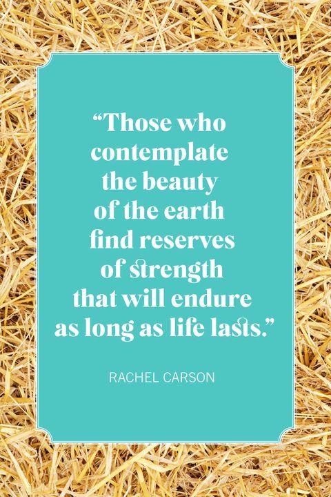 nature quotes rachel carson