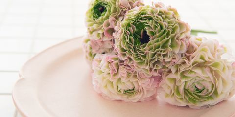 Beautiful pink ranunculus