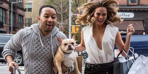 Human, Dog breed, Window, Dog, Carnivore, Bag, Street fashion, Sporting Group, Luggage and bags, Companion dog,