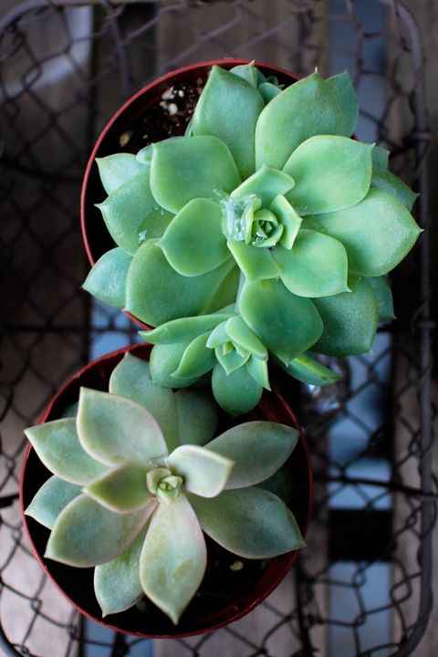 Directly Above View Of Succulent Plants At Home