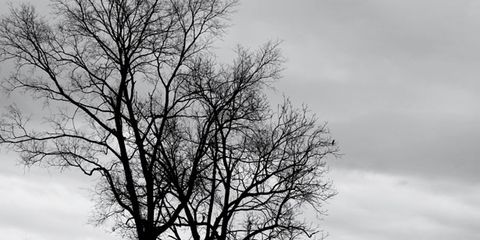 Branch, Twig, Monochrome, Natural landscape, Atmosphere, Monochrome photography, Leaf, Black-and-white, Woody plant, Trunk,