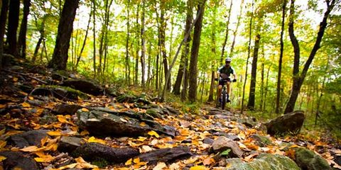 Natural environment, Deciduous, Tree, Leaf, Forest, Old-growth forest, Trail, Woody plant, Mountain biking, Woodland,