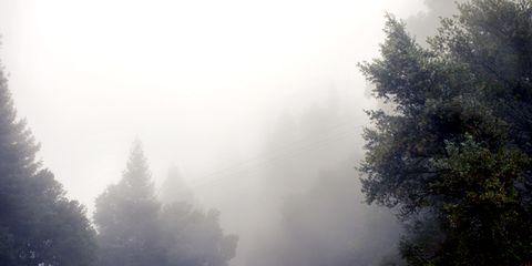 Road, Natural landscape, Atmospheric phenomenon, Mist, Infrastructure, Atmosphere, Road surface, Haze, Asphalt, Woody plant,