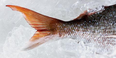 The best seafood you're not eating