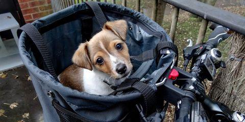 Bike Basket Puppy
