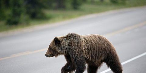 bear road crash california pro cyclist