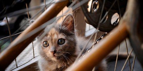 kitten cycling ride Brazilian cyclist