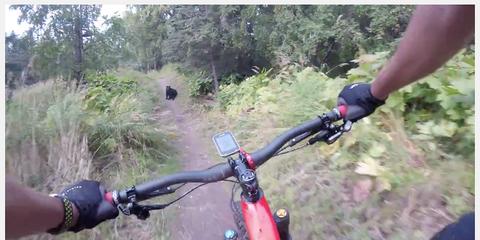 Black Bear on Bike Trail