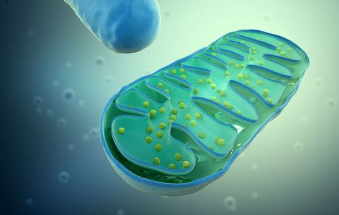 an illustration of a gorgeous mitochondria