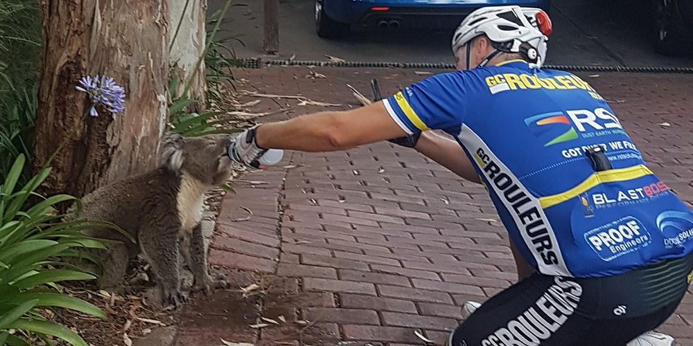 Cyclist Koala Water Bottle