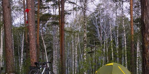 bikes and tent in forest