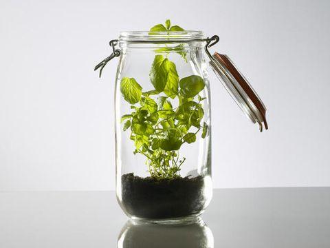 Glass, Transparent material, Artifact, Interior design, Vase, Mason jar, Still life photography, Annual plant, Plant stem, Food storage containers,