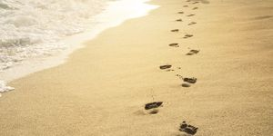 strand-weetjes-feiten