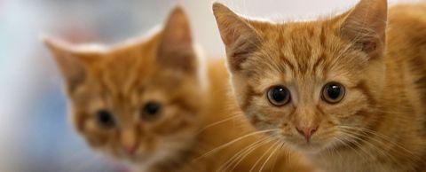 internationale-kattendag
