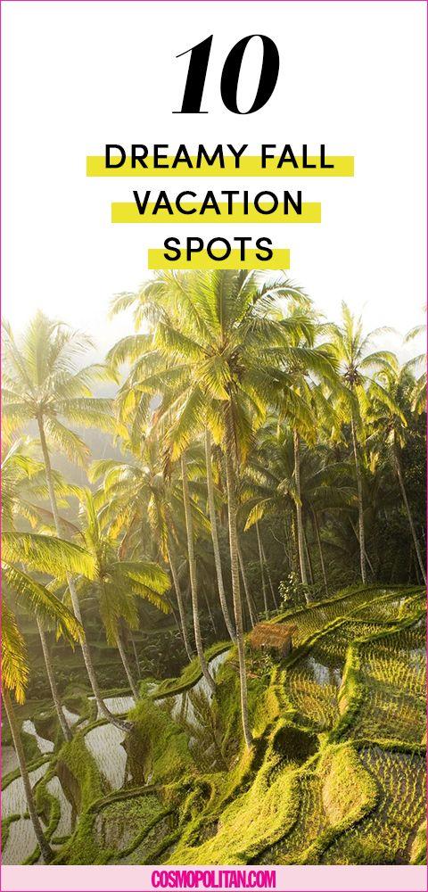 Vegetation, Arecales, Woody plant, Terrestrial plant, Tropics, Flowering plant, Jungle, Palm tree, Plantation, Publication,