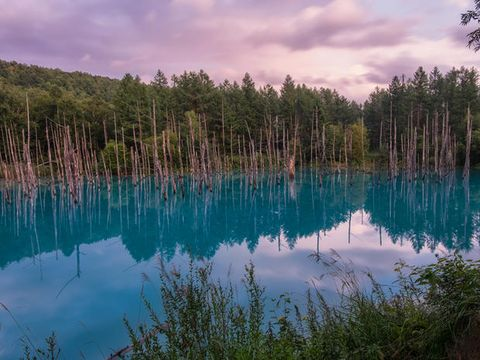 Reflection, Body of water, Natural landscape, Nature, Water, Natural environment, Lake, Sky, Tree, Nature reserve,