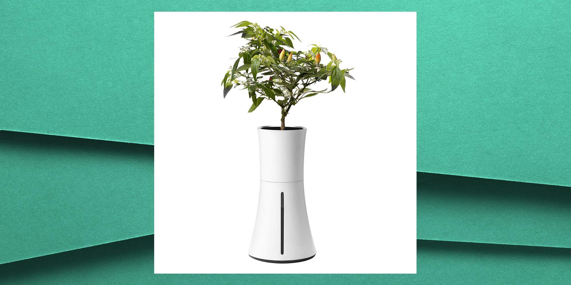 Botanium's Self-Watering Pot Is The Secret To Finally Scoring A Green Thumb