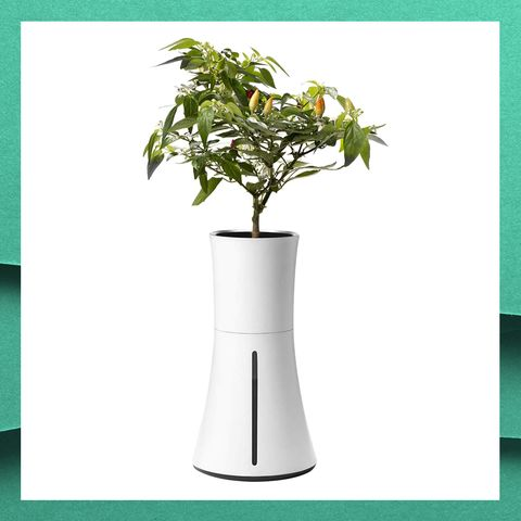 Flowerpot, Green, Plant, Houseplant, Tree, Vase, Flower, Plant stem,