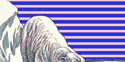 Walrus, Line art, Illustration, Organism, Marine mammal, Printmaking, Adaptation, Drawing, Art, Coloring book,