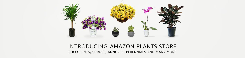 plants, amazon.com