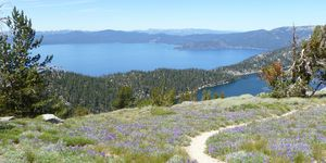 best running trail Tahoe Rim Trail