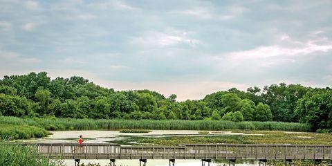 Marsh, Natural landscape, Wetland, Pond, Freshwater marsh, Fen, Nature reserve, Bank, Rural area, Grass family,