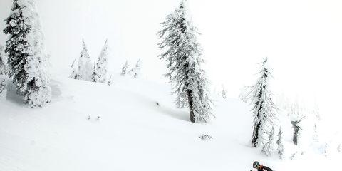 Winter, Branch, Slope, Winter sport, Freezing, Snow, Ski, Glacial landform, Ski Equipment, Terrain,