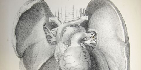 drawing of the human heart and lungs