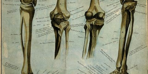 Drawing of lower leg bones