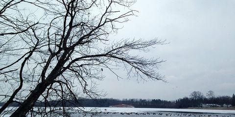 the lake`