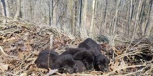 barkley marathons puppies in woods