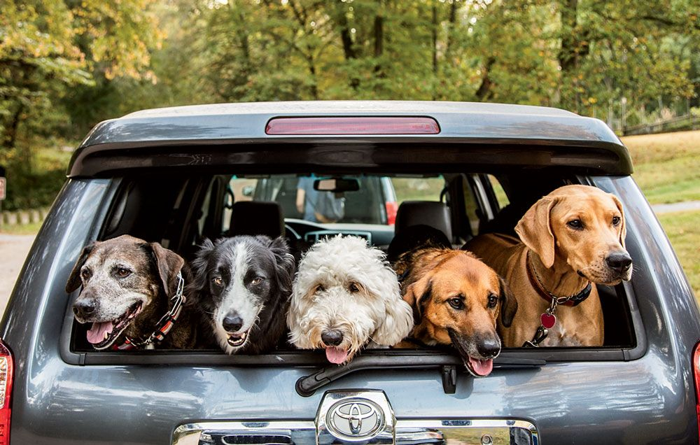 Best Dog Runners in the Country | Runner's World