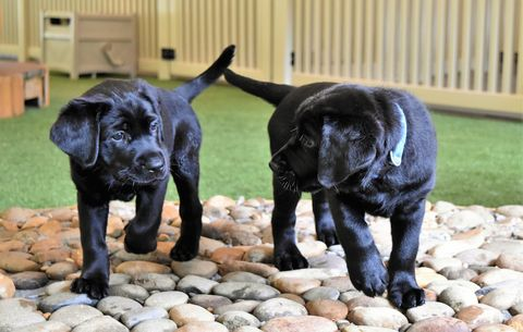 The puppies playing