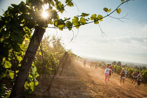 Branch, Leaf, People in nature, Sunlight, Trail, Sun, Morning, Endurance sports, Dirt road, Running,