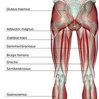 A Pain in the Rear: High Hamstring Tendinitis | Runner's World