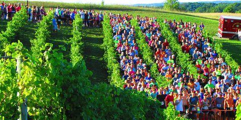 Harvest Stompede race