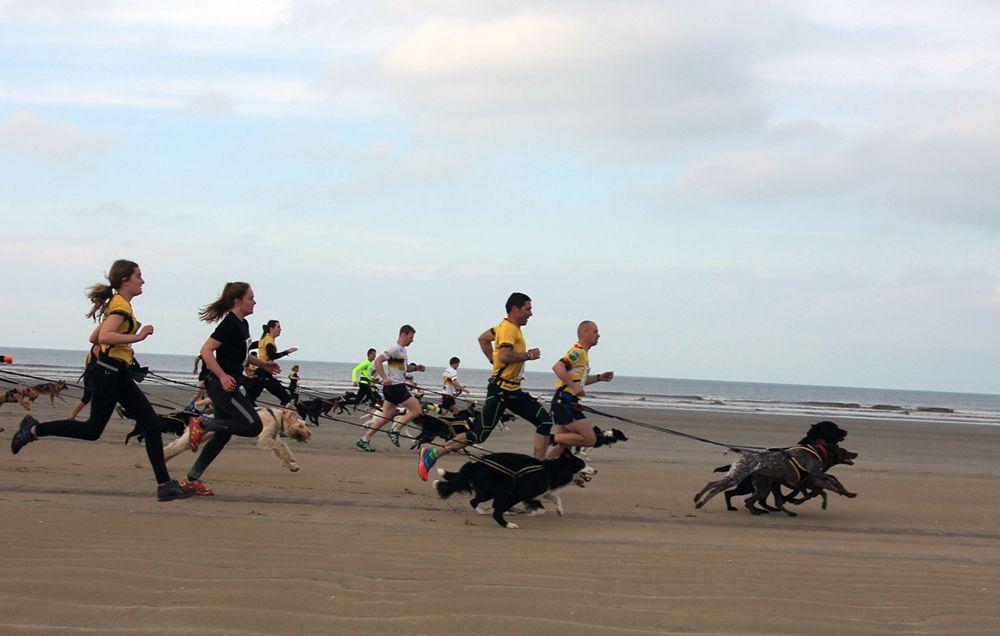 "531a4817a9 Want to Run a Fast 5K  Let Your Dog Pull You to Greatness. """