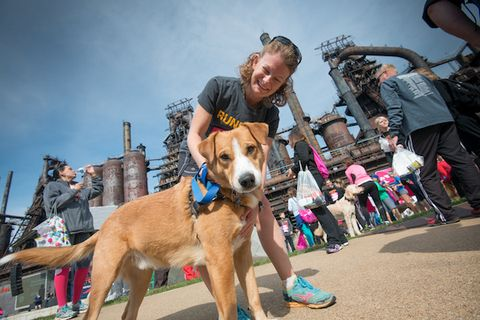 Runners World Half and Festival dog run