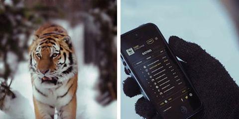 World Wildlife Fund Tiger Challenge