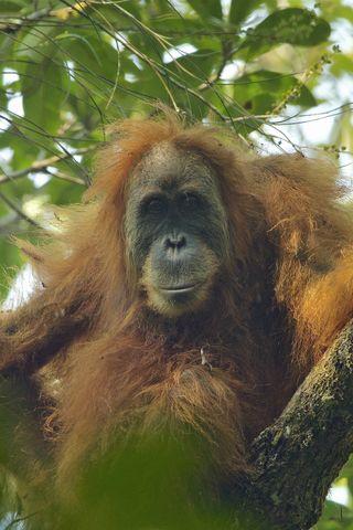 Animals That Are Going Extinct | Endangered Animals 2019