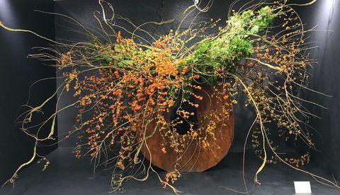 植物の貌2020