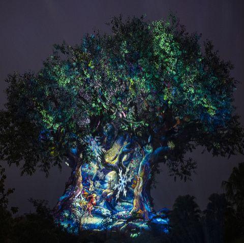 Tree, Green, Light, Night, Lighting, Sky, Woody plant, Plant, Darkness, Branch,