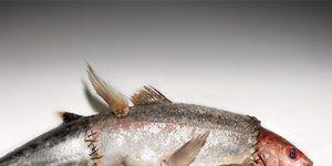 1109-frankenfish.jpg