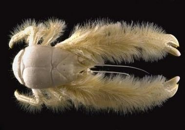 Organism, Macro photography, Plush, Feather, Stuffed toy, Fur, Wing,