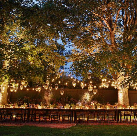 Tree, Lighting, Sky, Grass, Architecture, Woody plant, Plant, Estate, Night, Building,