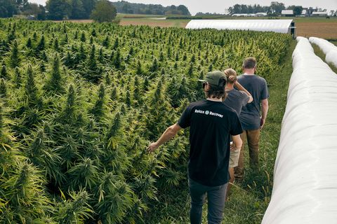 Floyd Landis' hemp farm in Lancaster County, PA in October 2019.