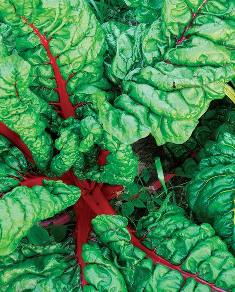 Swiss chard leafy greens