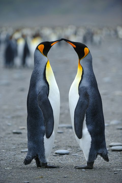 Aninimal Book: 30 Absolutely Delightful Facts You Never Knew About Penguins
