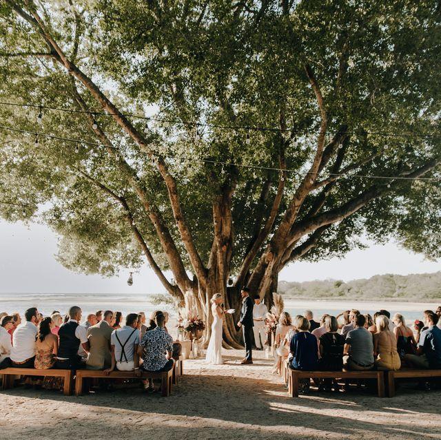 Photograph, Tree, Event, Ceremony, Photography, Plant, Landscape, Wedding, Vehicle, Leisure,