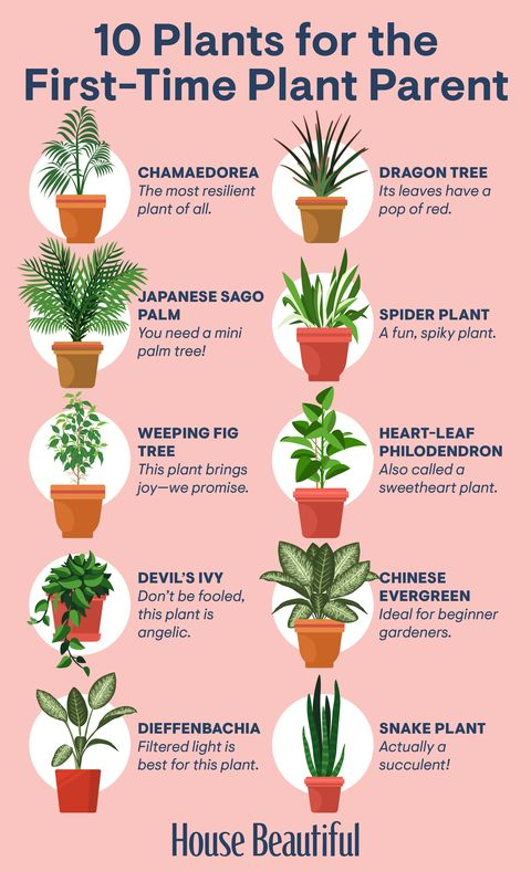 30 Houseplants That Can Survive Low Light Best Indoor